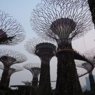 最近のシンガポール事情