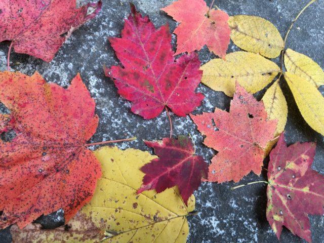 秋、紅葉の時期のハイキングは格別