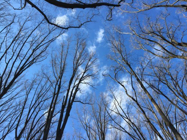 冬、山道から見上げた空