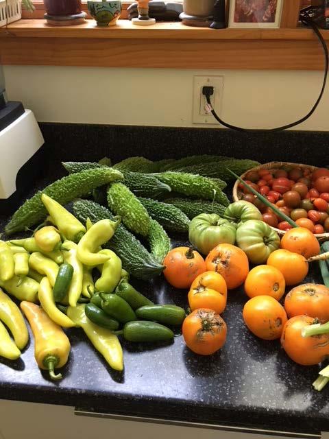 菜園で取れた野菜