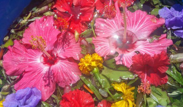 薬効のある草花でつくる聖なる水。マヤシャーマンの方法に基づき、私がつくりました。Spiritual cleansing plants