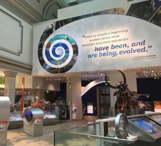 スミソニアン自然史博物館の化石ホール(Fossil Hall)