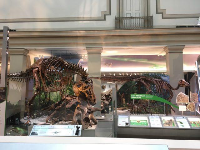 恐竜T.Rex vs Triceratops