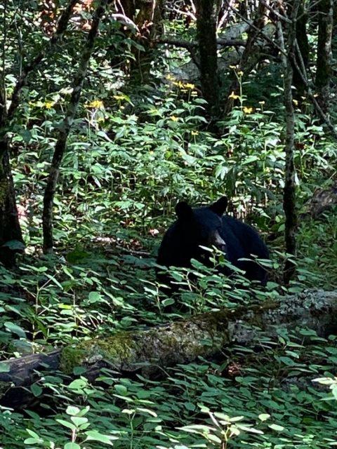 自然の中の熊さんにも遭遇