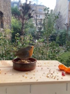 自宅の庭に餌を食べに来た「ムース」