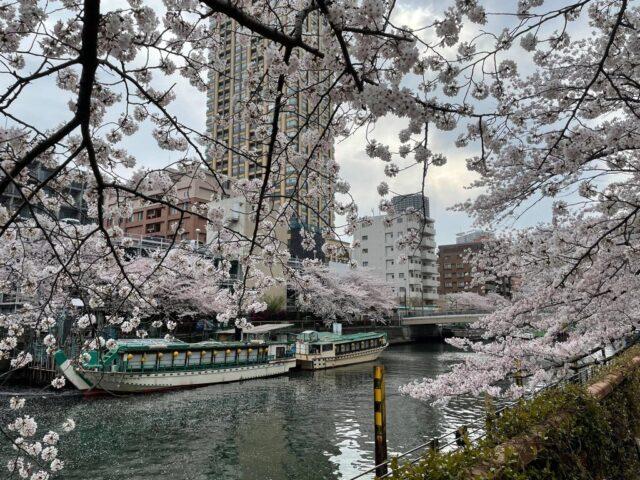 3月中旬、日本に入国。2週間の自己隔離期間はあったが、桜を楽しむことができた